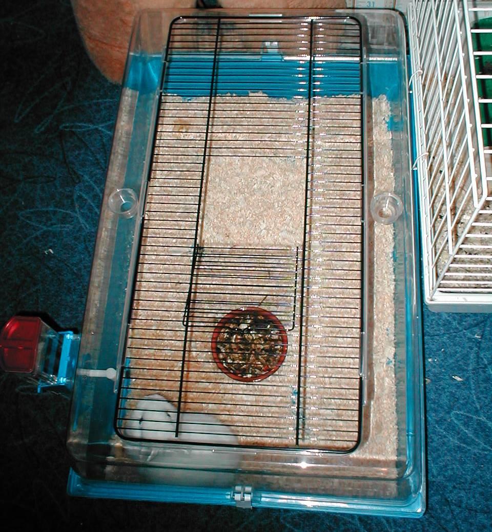 Cage lapin bois - Cage deco pas cher ...