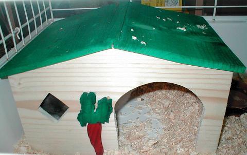 Elevage de l 39 orangeraie tout sur le lapin nain for Construire une cabane a lapin exterieur